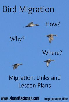 Share it! Science News : See it? Share it! Bird Migration