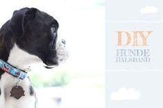 {DIY-Freutag} Hundehalsband selber nähen - siebenkilopaket