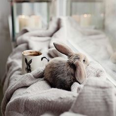 #allthebeautifulthings #morning #goodmorning #coffee #coffeetime #bunny #cozy #waitingforchristmas #slowliving #hygge