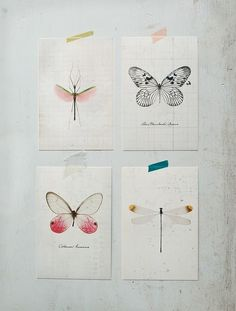 If I can't get a real framed insect then a print will have to do...these are from IKEA