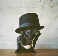 i want a french bulldog. and i want it now.