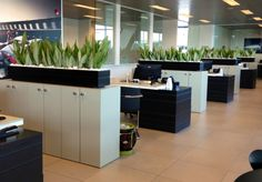 Image result for moveable planters to divide space