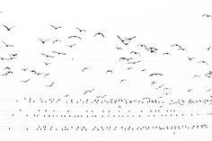 yoshinori-mizutani-tokyo-cormorant-12