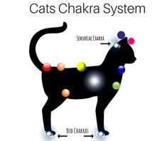 Chakra Meditation, Chakra Mantra, 7 Chakras, Communication Animale, Animal Reiki, Spiritual Animal, Witchcraft Spell Books, Mudras, Chakra System