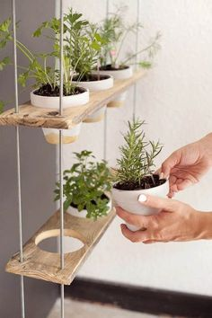 15 DIY Garden Wood Projects To Boost Your Property Value On A Budget # herbal gas . - 15 DIY Garden Wood Projects To Boost Your Property Value On A Budget # herb garden design The small - Hanging Herbs, Diy Hanging, Hanging Herb Gardens, Diy Herb Garden, Home And Garden, Herbs Garden, Herb Garden In Kitchen, Kitchen Gardening, Garden Kids