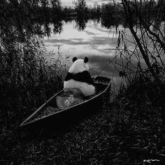 Fishing some feelings with friends. by Karen Cantuq Panda Love, Cute Panda, Panda Images, Panda Wallpapers, Panda Art, Web Design, Fauna, In My Feelings, Funny Cute