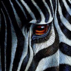 Het oog van de Zebra