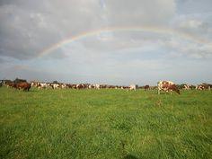 New Zealand Ayrshire Conference farm visit to Sanrosa Ayrshires