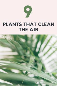 Did you know that plants cleans the air? Read more on my plante-blog. Air Purifier, Read More, Did You Know, Knowing You, Herbs, Cleaning, Plants, Blog, Herb