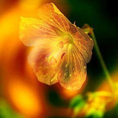 Please shine by SvitakovaEva on DeviantArt Dandelion, Deviantart, Plants, Inspiration, Biblical Inspiration, Dandelions, Planters, Plant, Inspirational