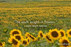 """""""The earth laughs in flowers."""" - Ralph Waldo Emerson"""