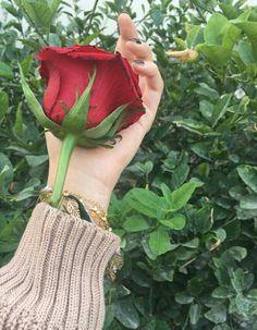 وقد تلينُ الليالي بعد قسوتها ويسمحُ الورد بعد الشوكِ بالزهّر..