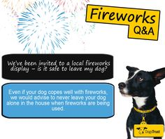 Remember remember your dog this November! A Dogs Trust survey of 3,750 pet owners shows that two-thirds of dogs are worried by fireworks and that 93% of their owners alter their routine during fireworks celebrations to try to minimise the trauma on their pets. Click the pin to find out more!