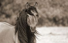 Mustang Horse Equine Kimerlee Curyl Photography