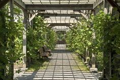 Sun drenched pergola with vines in the Botanical Garden of Montreal, Quebec, Canada Stock Photo