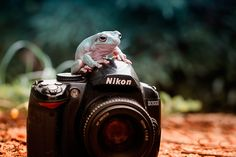 Photograph with nikon D3000 by  Hendy Mp on 500px