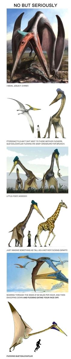 The Quetzalcoatlus…how did Jurassic Park never teach me about this! << because Jurassic Park didn't even teach about actual velociraptors Jurassic Park, Jurassic World, Tumblr Funny, Funny Memes, Hilarious, Funny Quotes, Jokes, Funny Videos, Tyrannosaurus