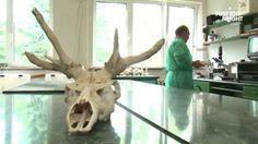Współczesny świat bywa dla przyrody bardzo agresywny. Wiele gatunków zwierząt jest zagrożonych. Praca nad ich ochroną – to misja współczesnej nauki.