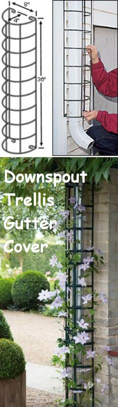 Climbing plants will hide downspouts and gutters with downspout trellis gutter cover