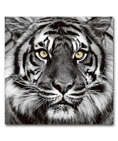 Loving this Tiger Face High-Definition Wall Art on #zulily! #zulilyfinds