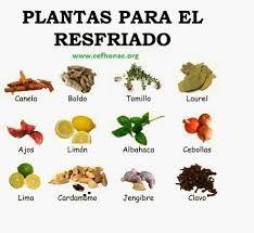 Remedios suplementos y plantas para mejorar enfermedades - Meteorismo remedios ...