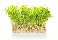 Vu la place qu'elles prennent... en fait un micro-jardin d'intérieur !