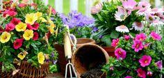 كيف تزرع الزهور