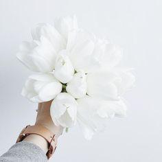 White tulips... #myobsession