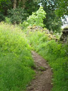 A Scottish Trail