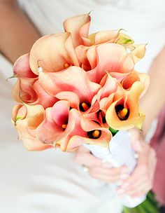Few fresh cut flowers offer the elegance and versatility of the calla lily. If you are designing your own wedding bouquet, centerpieces or arrangements, the calla lily will provide all of the style… Calla Lily Wedding Flowers, Calla Lily Bouquet, Calla Lillies, Wedding Bouquets, Peach Bouquet, Wedding Centerpieces, Lys Calla, Wedding Wishes, Flower Arrangements