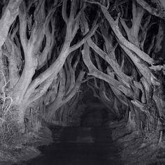 Velveteen trees