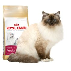 Alimento específico para #gato #Persa   #Maskokotas #RoyalCanin #gato #cat Persian 30 Royal Canin Maskokotas