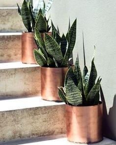 Bom dia! O cobre, tendência na decoração, pode deixar suas plantas ainda mais vistosas. Em um ambiente iluminado pela luz do sol, os vasos de cobre ficam ainda mais bonitos. #revistacasaclaudia #decor #decoration #decoração #home #house #casa #cobre #copper