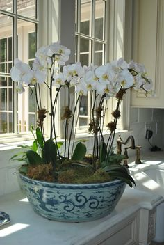cultivar las orquídeas Orchids in blue porcelain. May do this with the large antique Willow-print bowl I have.Orchids in blue porcelain. May do this with the large antique Willow-print bowl I have. Orchid Arrangements, Enchanted Home, Orchid Plants, Orchid Pot, Orchids Garden, White Orchids, Container Plants, White Decor, Indoor Plants