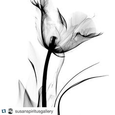 X-ray Art Photography More Pins Like This At FOSTERGINGER @ Pinterest