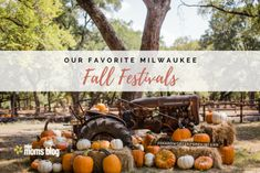 Ya'll, I'm so excited for fall! I put together a Fall family bucket list. These are fun fall activities for kids and traditions I look forward to every Giant Pumpkin, Pumpkin Farm, Pumpkin Bread, Festival Games, Festival Flyer, London With Kids, Fall Dates, Autumn Activities For Kids, Family Activities