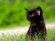 Download Kittens wallpaper, 'Black kitten where now'.