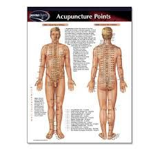 Permachart featuring the various Acupuncture Points on the human body, including diagrams of all Meridians. Acupressure Mat, Healthy Holistic Living, Hips Dips, Frozen Shoulder, Acupuncture Points, Chiropractic Wellness, Holistic Medicine, Trigger Points, Travel Humor