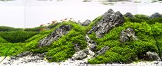 This tank, also from the Brasilian Contest (2nd place in nano category), is a perfectly executed example of a rocky landscape aquarium in very tiny dimensions (25 litres only!) Perfect balance, stunning planting, wonderful reflections by Paulo Vitor...