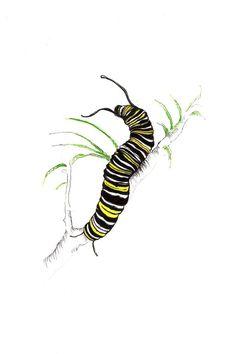 Monarch Caterpillar Print: Digital print of an original drawing available or Caterpillar Tattoo, Monarch Caterpillar, Insect Tattoo, Bug Tattoo, Botanical Illustration, Science Illustration, Nature Illustration, Drawing Projects, Drawing Ideas