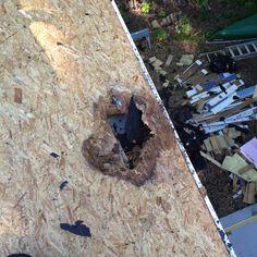 Wood Rot Damage near Fascia Board