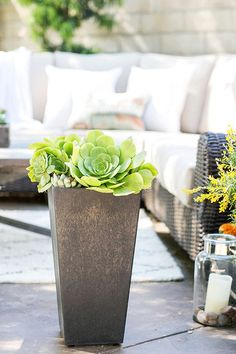 Eden Passante of Sugar and Charm used pots of different sizes to layer plants and flowers to add depth to her outdoor living space. These succulents look smashing in this tall planter. See more of her patio makeover on The Home Depot Blog. || @sugarandcharm