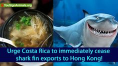 Urge Costa Rica to immediately cease shark fin exports to Hong Kong! | YouSignAnimals.org