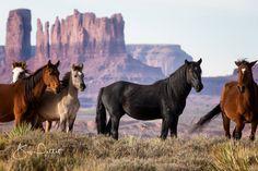 — WILD HORSES.                                                                                                                                                                                 More