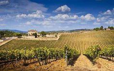 Toscana e la guerra del vino: moglie assessore e marito professore dietro la campagna anti-vigne