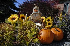 Halloween Activities and Party and Game ideas for seniors in nursing homes.