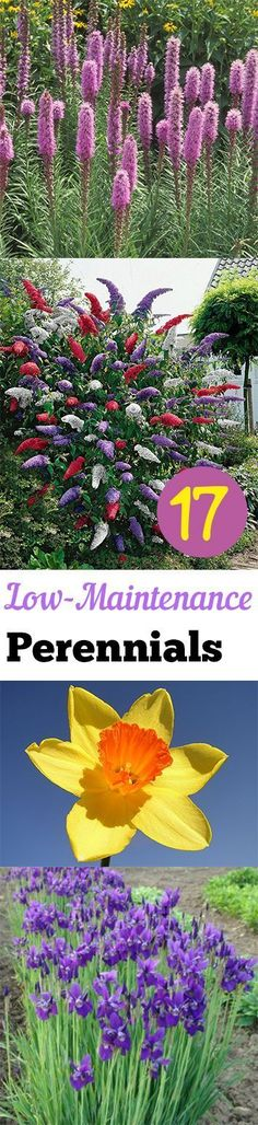 1000 ideas about low maintenance plants on pinterest for Flowers that require low maintenance