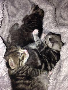 <3 Kitty, Cats, Animals, Little Kitty, Kitten, Gatos, Kitty Cats, Animaux, Animal