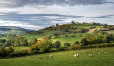 The Shropshire Hills near Wentnor Britain, Natural Beauty, Golf Courses, England, Mountains, Travel, Sheep, Textiles, Traditional