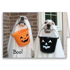 Golden Retriever Halloween Ghosts Greeting Cards